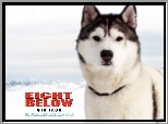 pies, góry, Eight Below