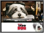 The Shaggy Dog, pies, okulary, komputer, biuro