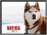 Eight Below, zaprzęg, pies